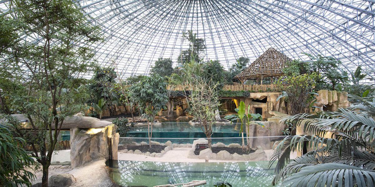 Vue Intérieur Dôme Équatorial - Territoire du ZooParc de Beauval
