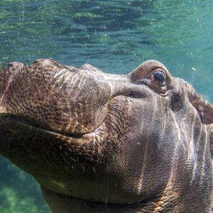 La Réserve des Hippopotames - Territoire du ZooParc de Beauval
