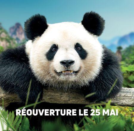 Réouverture ZooParc de Beauval et ses hôtels
