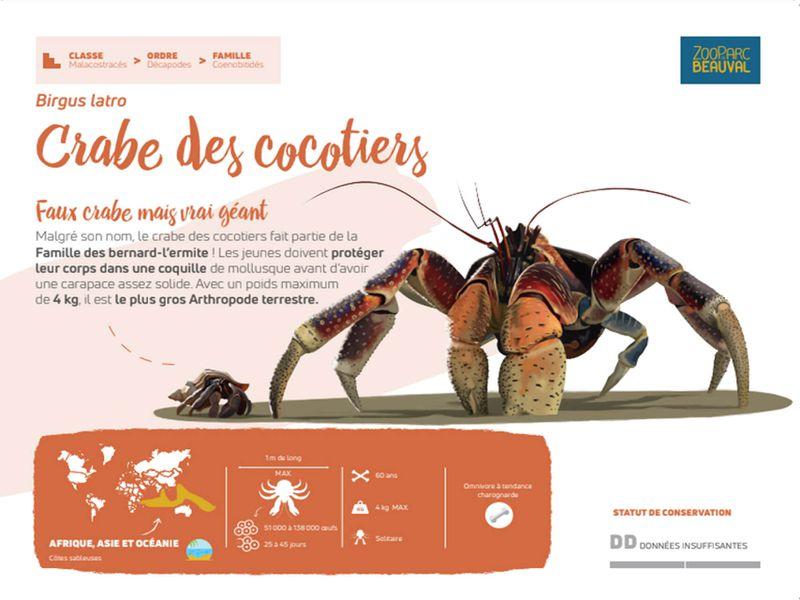 Nouveau panneau pédagogique du Dôme Équatorial -  Crabe des cocotiers - Pédagogie - ZooParc de Beauval