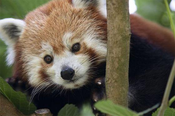 Aujourd'hui, c'est la journée mondiale des espèces menacées