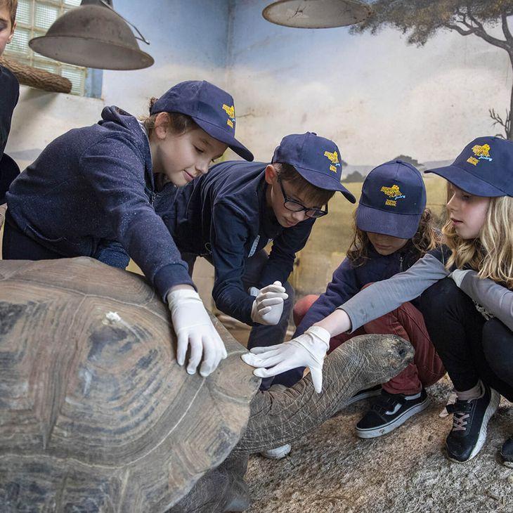 Toucher les tortues - Activité Soigneur d'un Jour junior - ZooParc de Beauval