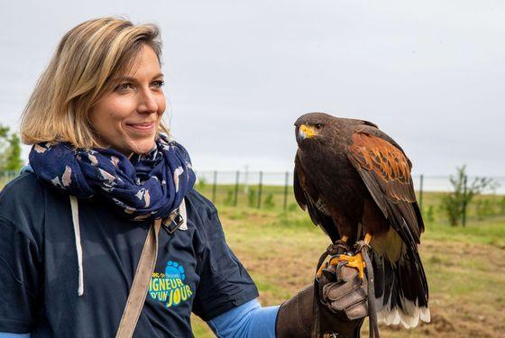 Initiation à la fauconnerie - Activité adulte Soigneur d'un Jour - ZooParc de Beauval