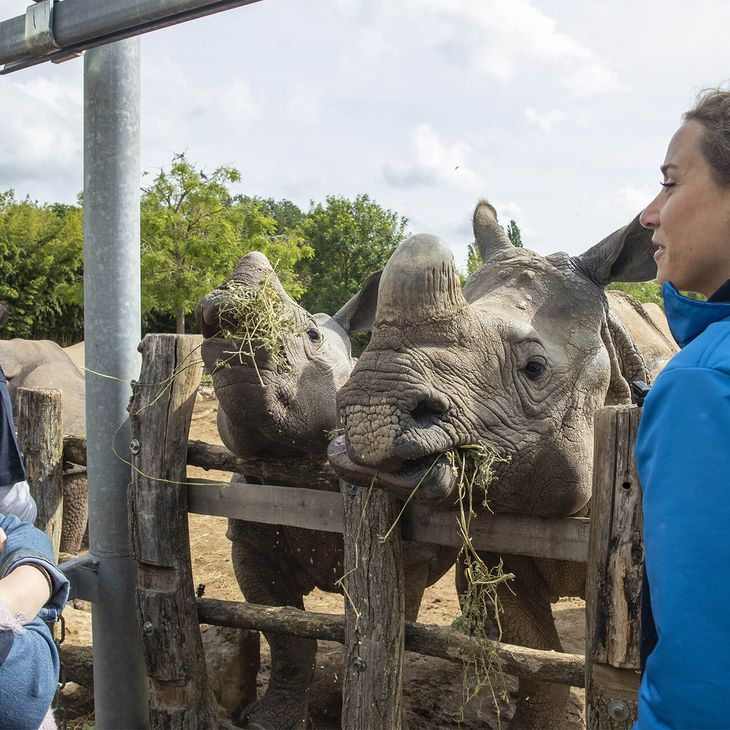 Au plus près des rhinocéros indiens - Activité Soigneur d'un Jour adulte été - ZooParc de Beauval