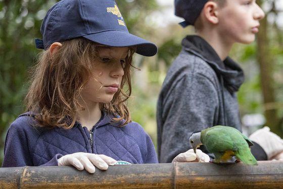 Rencontrer les oiseaux de la serre tropicale - Activité Soigneur d'un Jour junior - ZooParc de Beauval