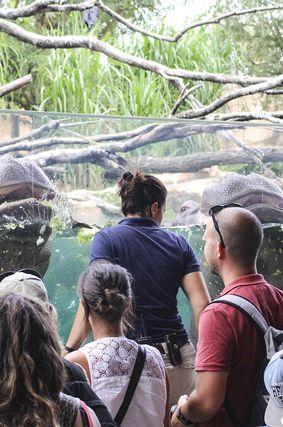 Nourrissage des hippopotames - Activité familiale Beauval en Coulisses - ZooParc de Beauval