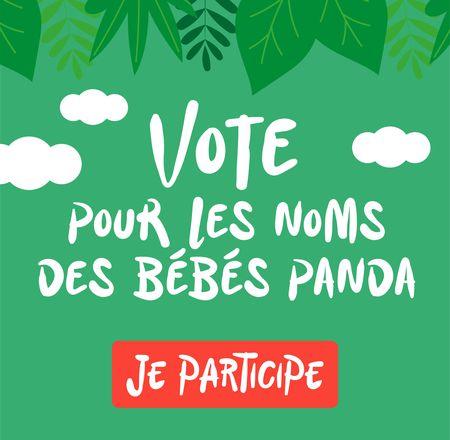 Nom bébés panda - ZooParc de Beauval