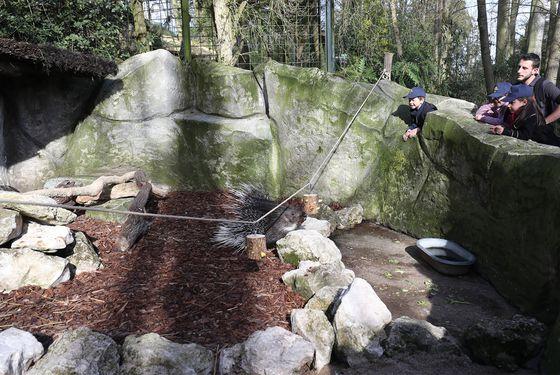 Création d'enrichissements pour les porcs-épics - Activités junior Graine de Soigneur - ZooParc de Beauval