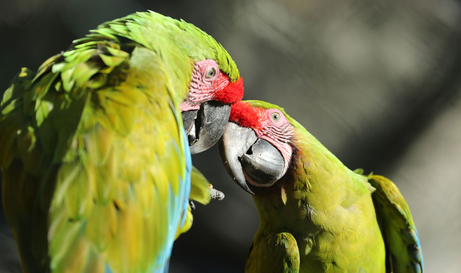La Rotonde des Perroquets - Territoire du ZooParc de Beauval