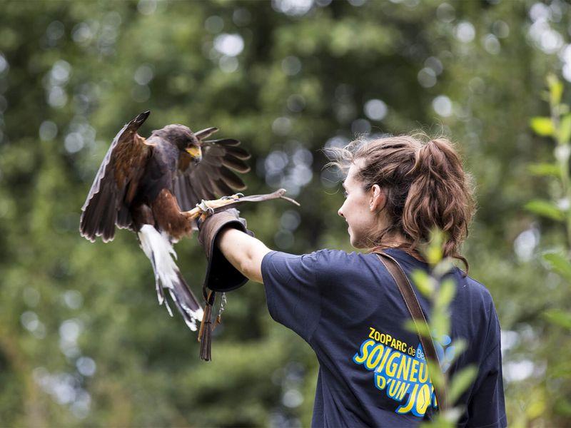 Initiation à la fauconnerie - Activité Soigneur d'un Jour adulte - ZooParc de Beauval