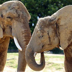 La Plaine des Éléphants