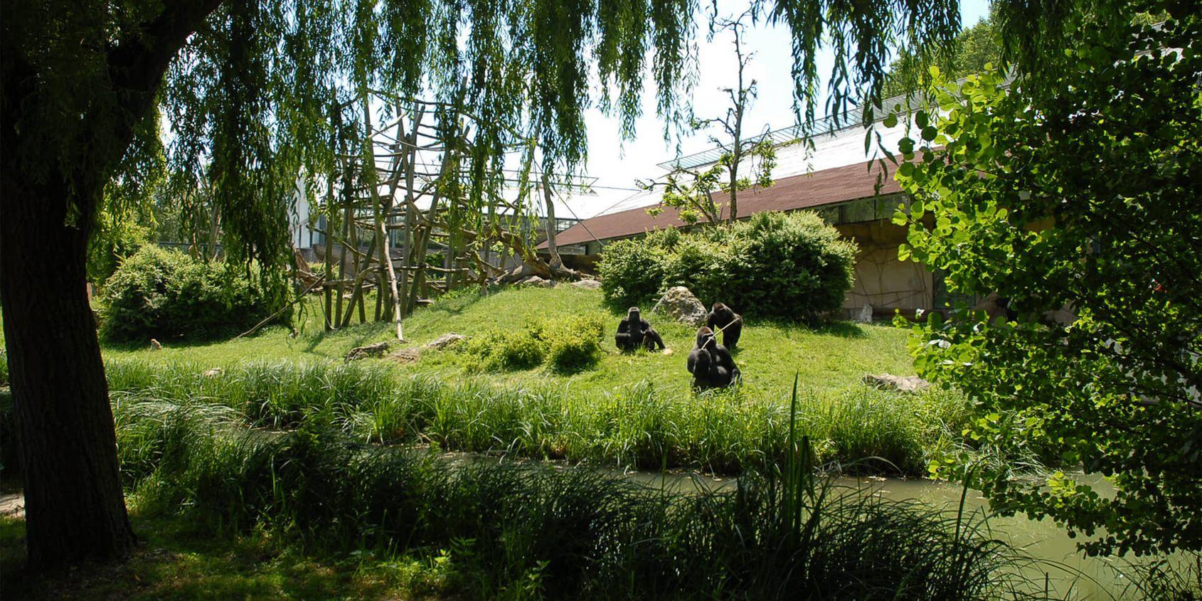 L'île des gorilles - Territoire de La Serre des Gorilles - ZooParc de Beauval