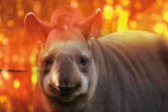 Beauval Nature lance un appel à dons pour le Pantanal