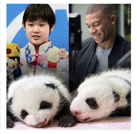 Parrains des bébés panda - ZooParc de Beauval