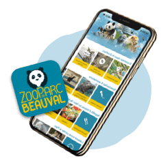 Download the Beauval app!