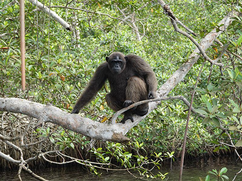 Reprise Help Congo - Association Beauval Nature - ZooParc de Beauval