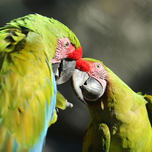 La Rotonde des Perroquets