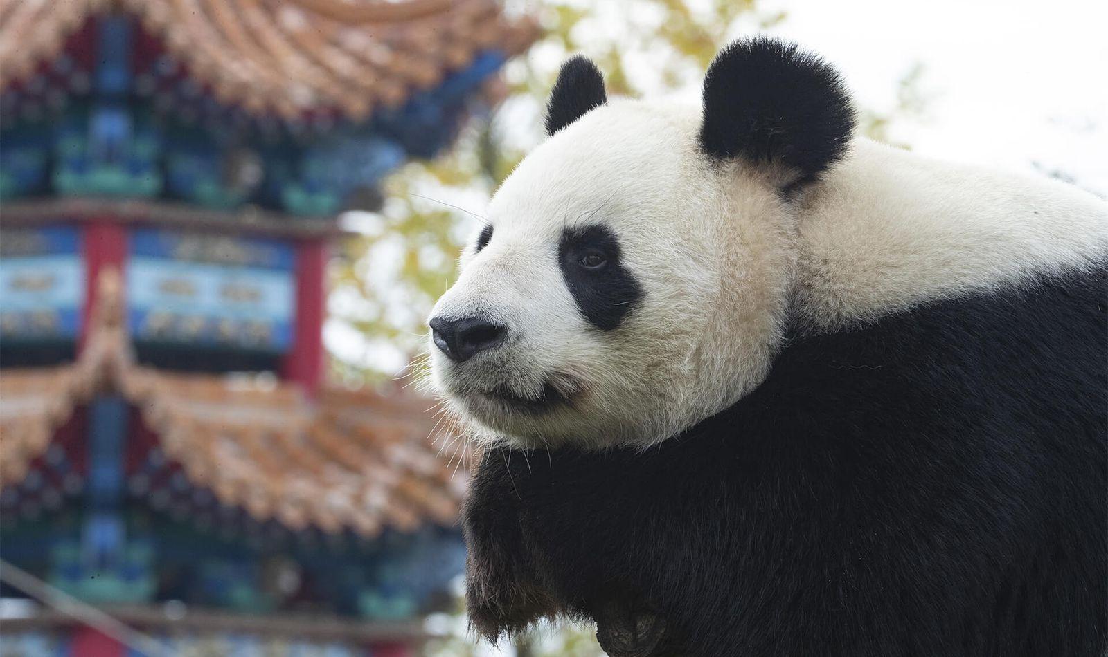 Les Hauteurs de Chine - Territoire du ZooParc de Beauval