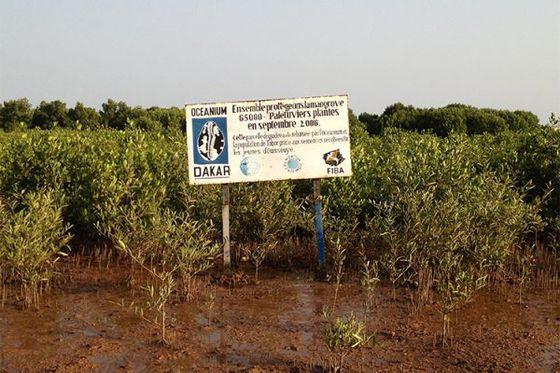 Le 26 juillet, journée mondiale de la mangrove !