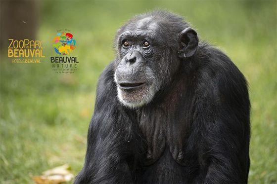 À partir de 2020, Beauval donne 1% de son chiffre d'affaires à la conservation