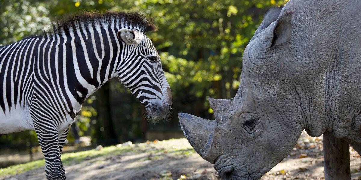 Zèbre et rhinocéros