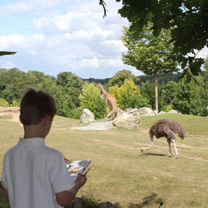 Carnet de jeux au bord de La Savane Africaine - Activités du ZooParc de Beauval