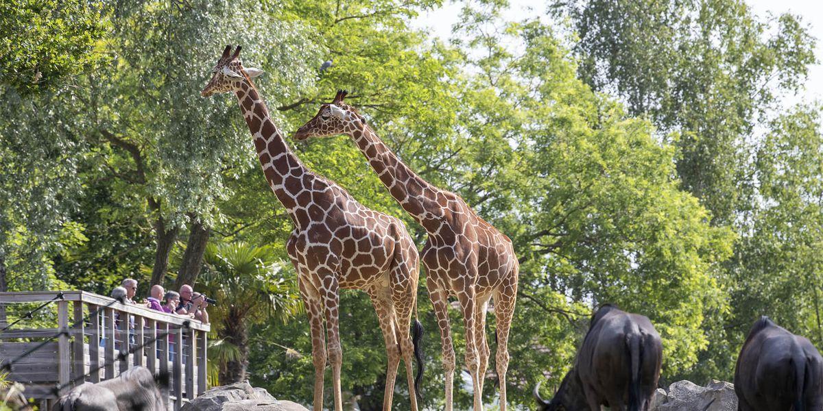 La Savane Africaine, animaux d'Afrique - Territoire du ZooParc de Beauval