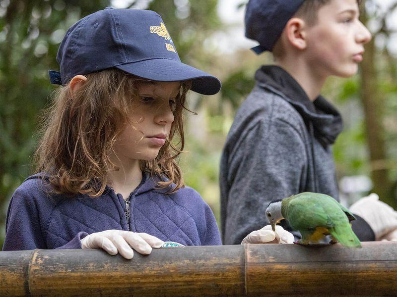 Au plus proches des oiseaux de la serre tropicale - Activité Soigneur d'un Jour junior - ZooParc de Beauval