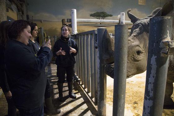 Activité Soigneur d'un Jour - Les animaux de la Savane Africaine - ZooParc de Beauval