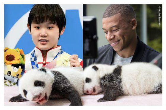 [Breaking news] : Les bébés panda parrainés par deux immenses champions : Kylian Mbappé et Zhang Jiaqi !!