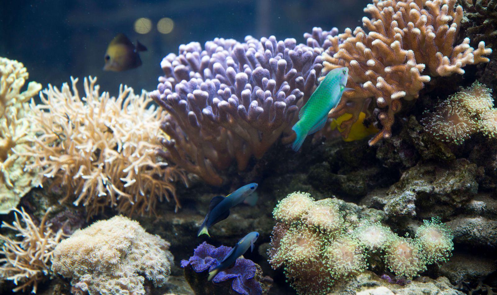 Poissons tropicaux et coraux - Consulter le plan du parc - ZooParc de Beauval