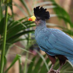 La Serre Tropicale des Oiseaux - Territoire du ZooParc de Beauval