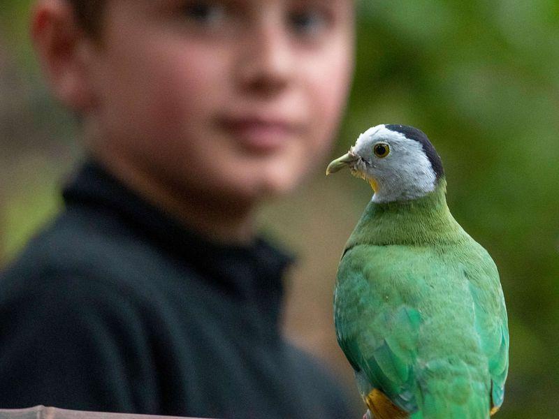 Au plus proche des oiseaux de la serre tropicale - Activité Zoo'Camp - ZooParc de Beauval