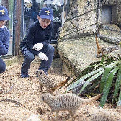 Nourrir les suricates - Activité Soigneur d'un Jour Junior - ZooParc de Beauval
