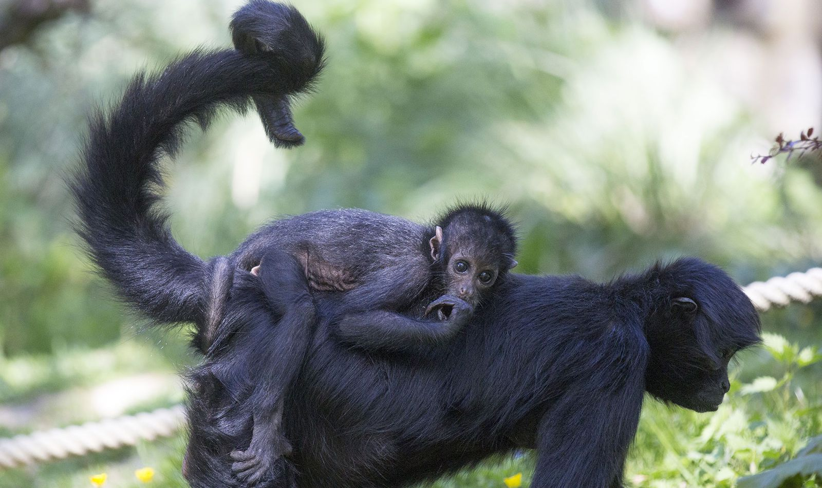 Les Allées des Petits Singes - Territoire du ZooParc de Beauval
