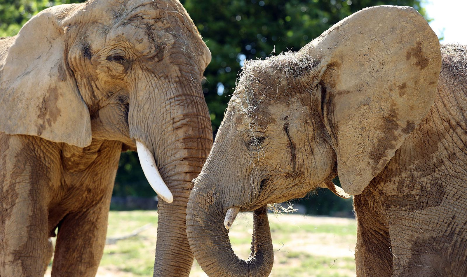 La Plaine des Éléphants - Territoire du ZooParc de Beauval