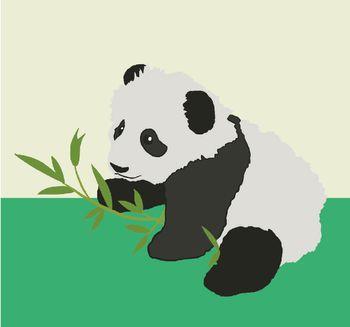 Croissance bébé panda géant - 6 mois - ZooParc de Beauval