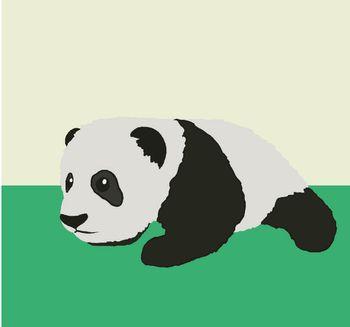 Croissance bébé panda géant - 3 mois - ZooParc de Beauval