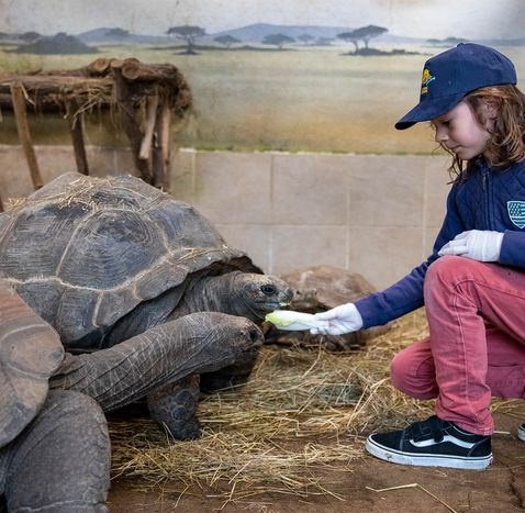Activité Soigneur d'un Jour junior - Nourrir les tortues - ZooParc de Beauval