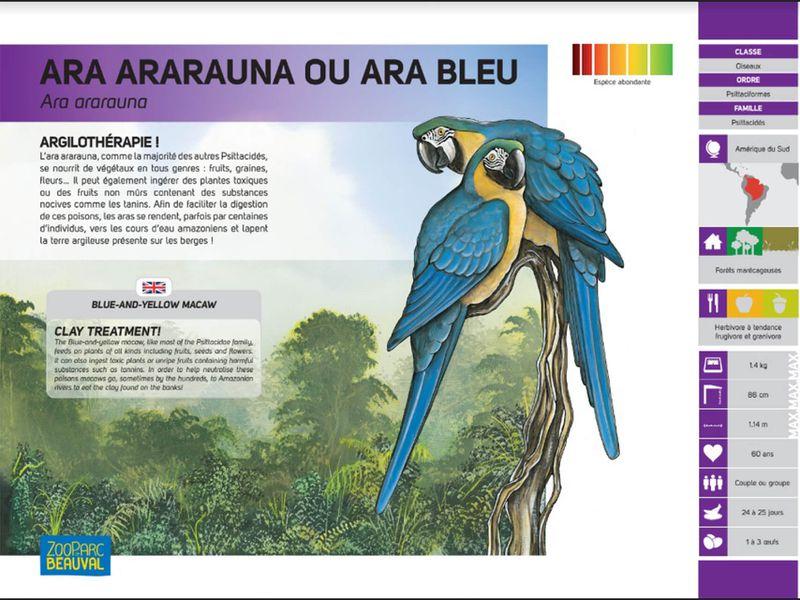 Ancien panneau pédagogique - Ara bleu - Pédagogie - ZooParc de Beauval