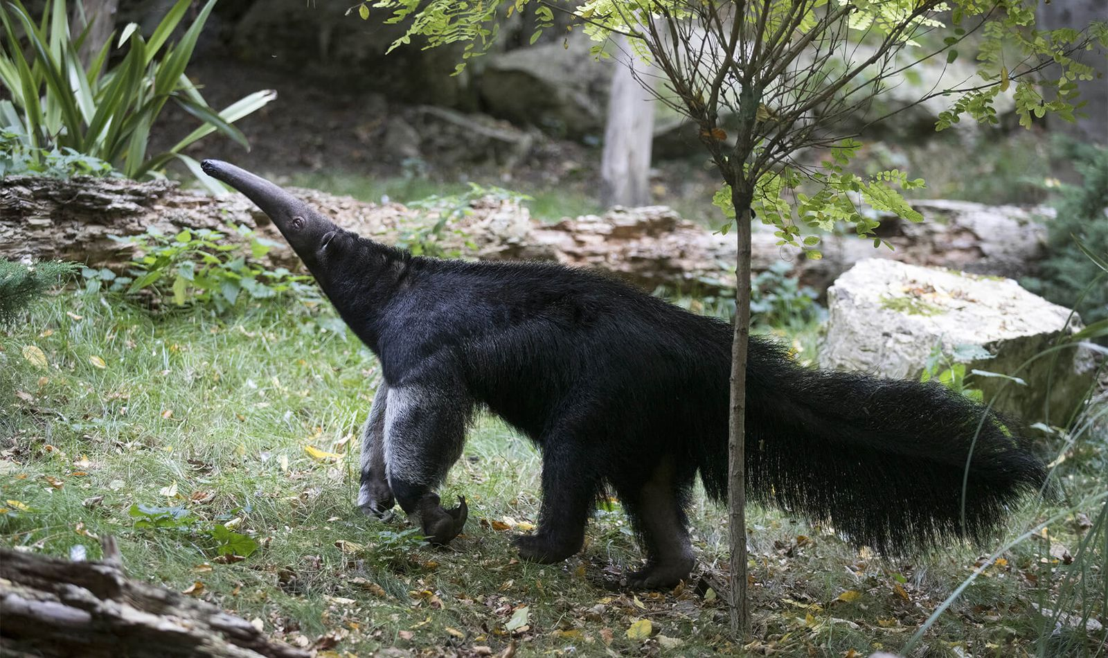Beauval Nature - Programmes de conservation - ZooParc de Beauval