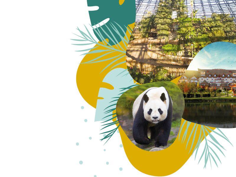 Jeu-concours, un séjour à gagner - 40 ans du ZooParc de Beauval