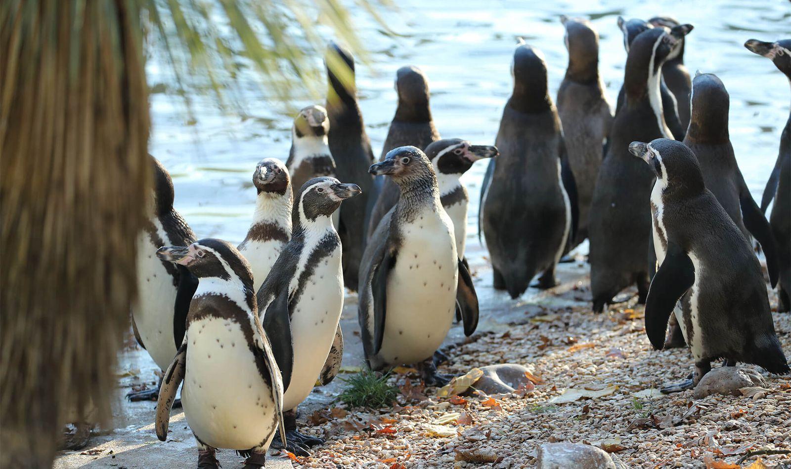 L'Allée Historique - Territoire du ZooParc de Beauval