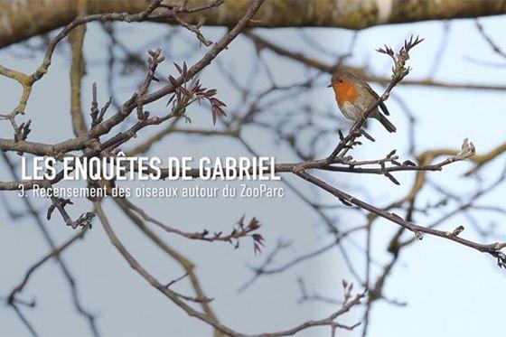 Le chant des oiseaux : objectif décryptage!