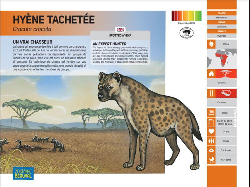 Ancien panneau pédagogique - Hyène - Pédagogie - ZooParc de Beauval