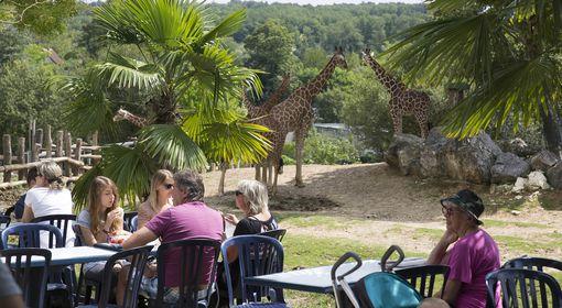La Savane - Restaurant - ZooParc de Beauval