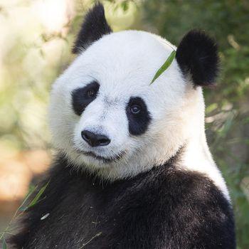 Offrir un séjour au ZooParc - Les hôtels de Beauval