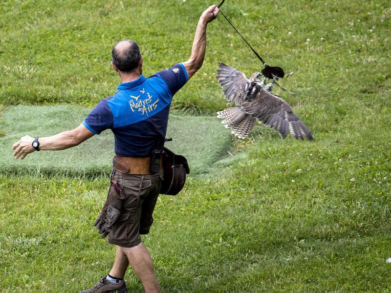 Spectacle d'oiseaux - Les Maître des Airs - ZooParc de Beauval