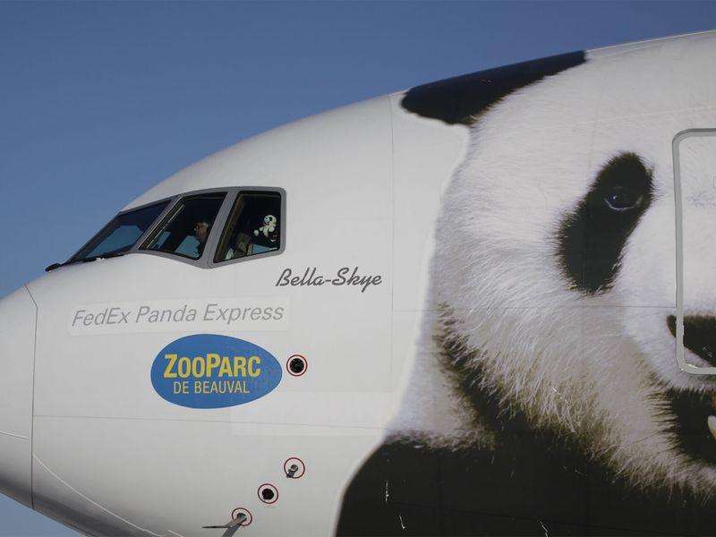 Arrivée à l'aéroport des pandas - ZooParc de Beauval