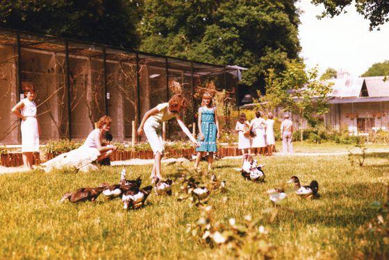 Beauval au début - 40 ans du ZooParc de Beauval